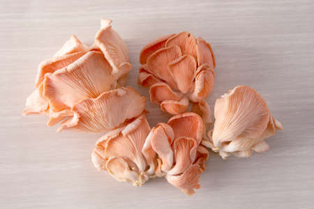 Salmon mushrooms over wood background
