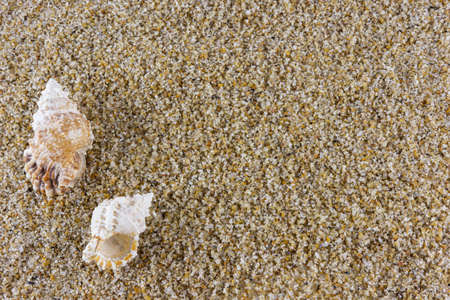 Pair of seashells over sand background with room for text. Shells at the beach 版權商用圖片