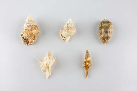 Group of seashells over white background