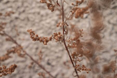 Dry plants. Natural floral background. Banner background for your seasonal holiday flyers, greetings and invitations, posters and greeting cards. Copy space Stockfoto