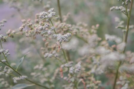 Dry field plants. Natural floral background. Banner background for your seasonal holiday flyers, greetings and invitations, posters and greeting cards. Copy space Stockfoto