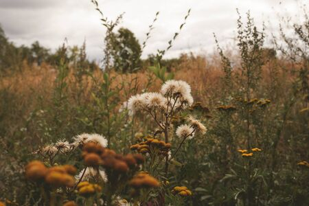 Dry field plants. Natural floral background. Banner background for your seasonal holiday flyers, greetings and invitations, posters and greeting cards. Copy space Standard-Bild