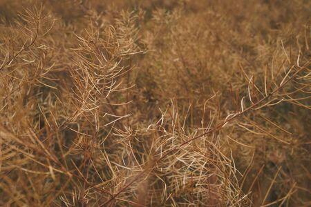 Dry field plants.