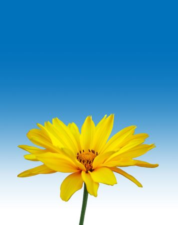 Yellow flower on blue background Stock Photo