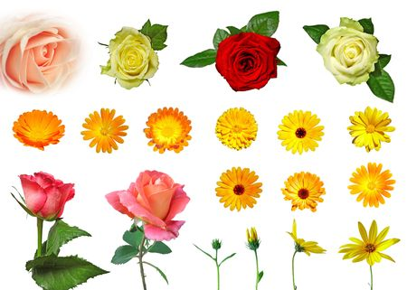 Large set of different isolated flowers