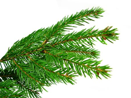 Fresh green fir branches isolated on white background Stock Photo