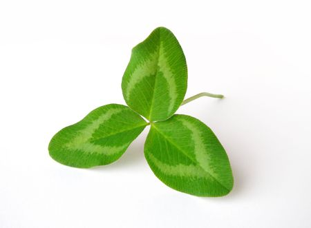 Clover leaf isolated on white background Stock Photo - 5621498