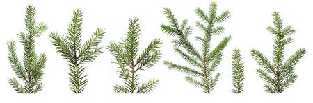 Fir tree branches isolated on white background Stock Photo
