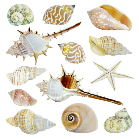 Different sea shells collection isolated on white background Reklamní fotografie