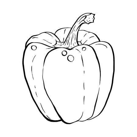 white pepper: Outline hand drawn sketch of paprika, bell pepper. Hand drawn outline sketchy style