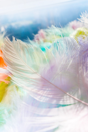 Soft multicolored feather photo with bokeh background.