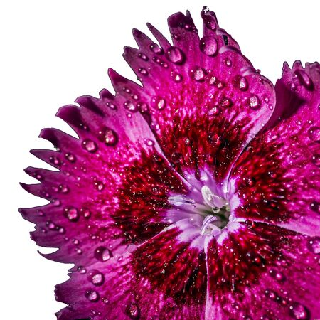 A flower with water droplets Stock Photo