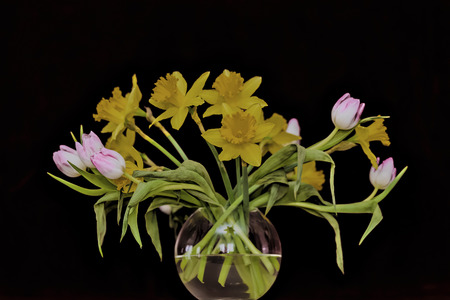 tulips and yellow daffodils - spring flowers in a vase in front of red wall