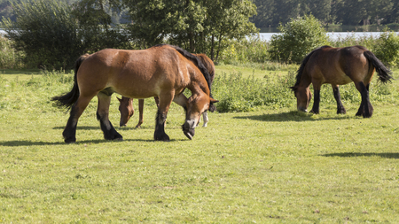 three horses in the meadow,