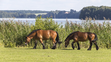 two horses in the meadow, Stock fotó - 113635008