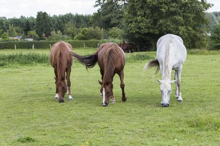 three horses in the meadow, Stock fotó - 113635009