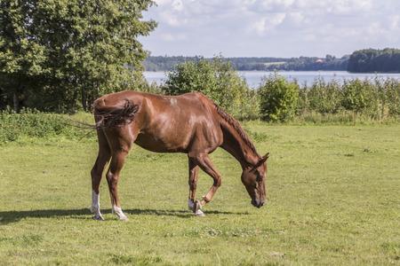 horses in the meadow, Stock fotó - 113635010
