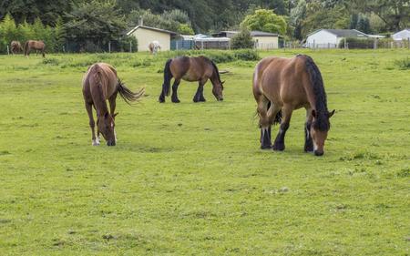 three horses in the meadow, Stock fotó - 113635011