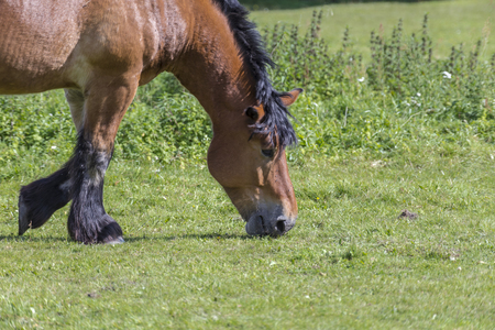 horses in the meadow,