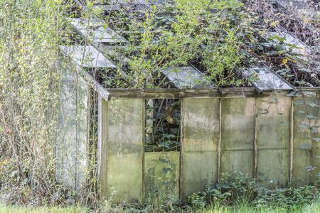 lost places, nature is reclaiming forest