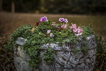 colorfulplants in autumn, Old stone trough with ornament