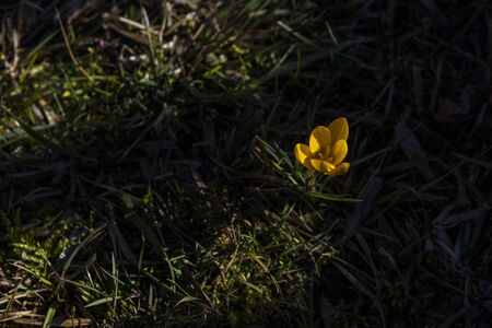 the first flowers after winter Standard-Bild