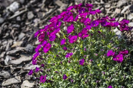 the flower season begins in garden Standard-Bild