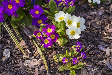 springtime in the garden, the first flowers