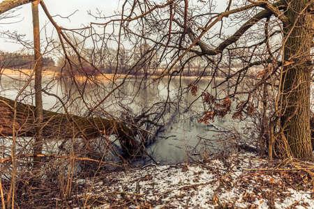 wild winter nature