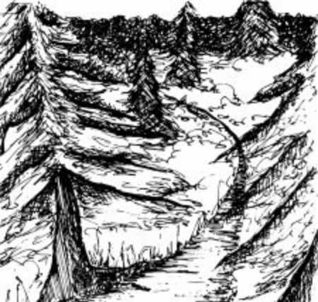 A trail winds through a cedar forest. Ilustrace