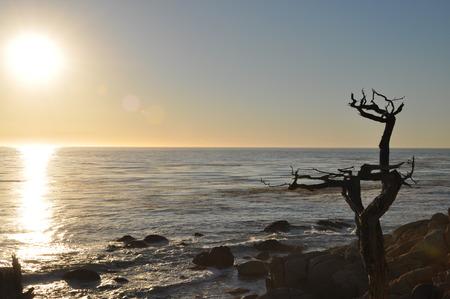droop: droop tree at the coast