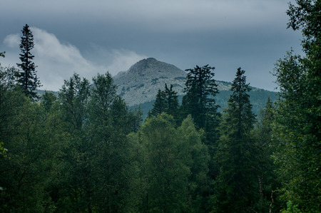 rise above: distant mountains rise above the wild forest. landscape