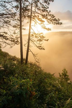 morning sun breaking through the fog. landscape