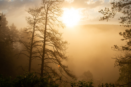 morning sun breaking through the fog. landscape Foto de archivo