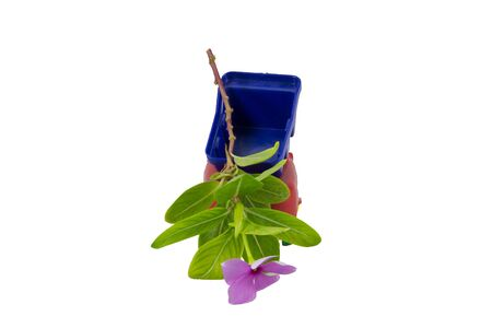 carritos de juguete: Coches de juguete verter flores de color púrpura a la izquierda en el suelo. Foto de archivo
