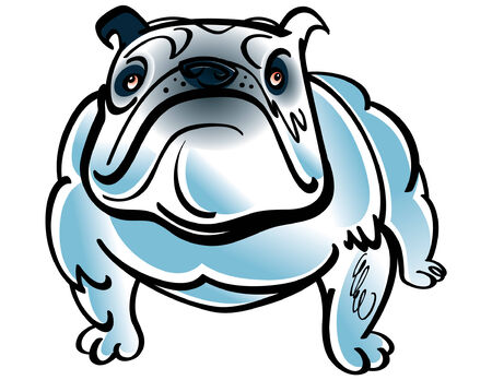 Colorful vector illustration of the dog Bulldog Stock Vector - 6488227