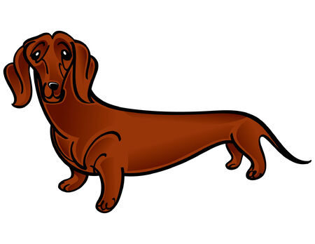 Colorful vector illustration of the dog Dachshund Stock Vector - 6488226
