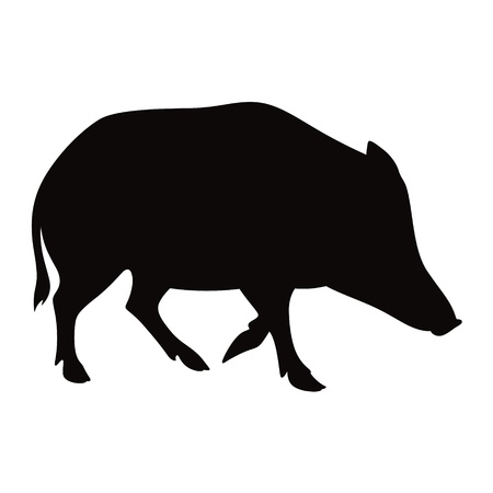 persistence: Boar animal pig beast nature vector illustration