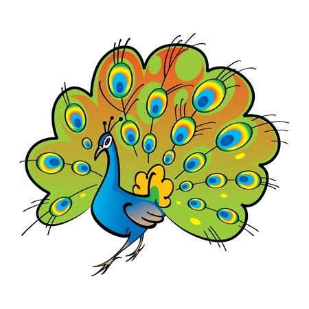 fauna: Hermosa ave pluma de la cola del pavo real Vectores