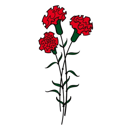 Red Carnations flower flora Vector