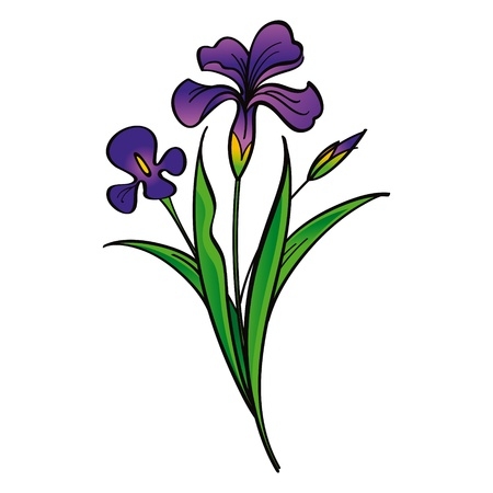 isolated irises: Iris - beautiful flowers flora