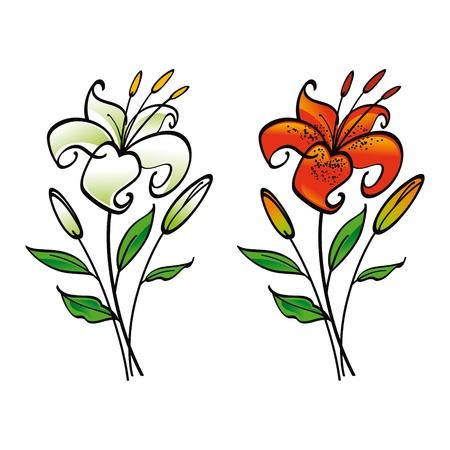 lily flower: Wit en Tiger Lily bloem flora Stock Illustratie