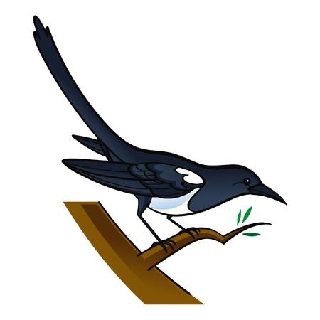 Magpie bird fauna tree Иллюстрация