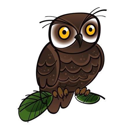 a large bird of prey: Owl bird fauna tree forest night