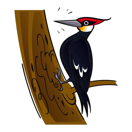 woodpecker: Woodpecker wood forest tree bird fauna