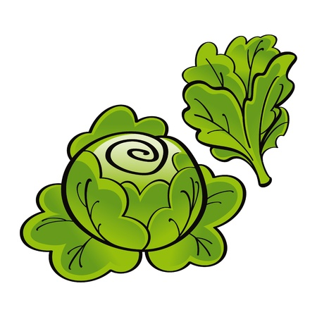 lechuga: Fresh vegetal verde lechuga de alimentos de la huerta de la cosecha