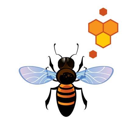 Honey comb: Bee Honey Comb - working insect bee