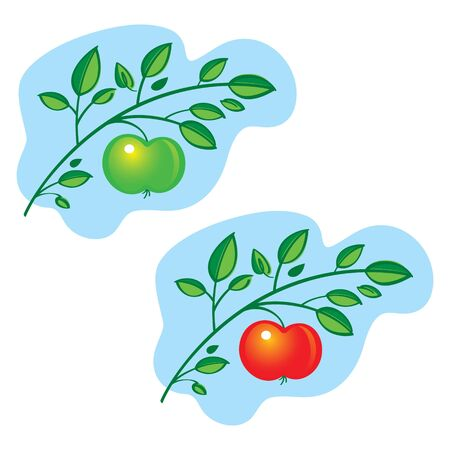 Apple Tree Branch fresh fruit leaves nature food Stock Vector - 12957962
