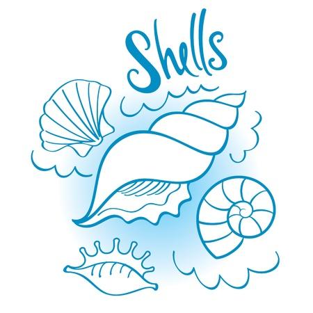 ostra: Conjunto de conchas de diferentes formas desde el fondo marino profundo oc�ano del mar