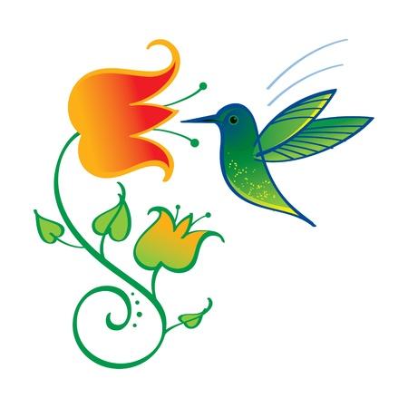 nectars: Colibri little exotic bird nature flower nectar Illustration